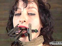 tied up beauty gets tongue and facial punishment